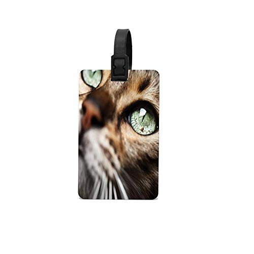 Jackie Prout ss Animal Cat Emerald Eyes Luggage Tags Airplane Name Tag Holder ID Labels