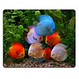 smoomfly-mouse-pad-natural-rubber-mousepad-image-id-27264117-discus-symphysodon-multi-colored-cichli
