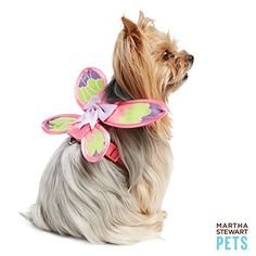 Martha Stewart Pets Butterfly Dog Vest Harness Size: XS