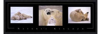 Poster Palooza Framed Nature's Kingdom-Polar Bears- 36x12 Inches - Art Print (Classic Black Frame)