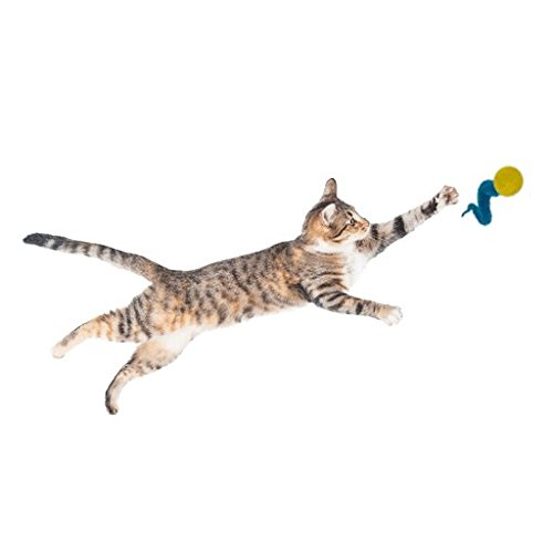 Dezi & Roo Wiggly Balls by Cat Toy Bouncing Ball Perfect for Cats of All Ages - 3 Pack by Dezi & Roo (Image #3)