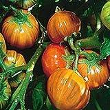 Seeds of Change S10812 Certified Organic Turkish Orange Eggplant