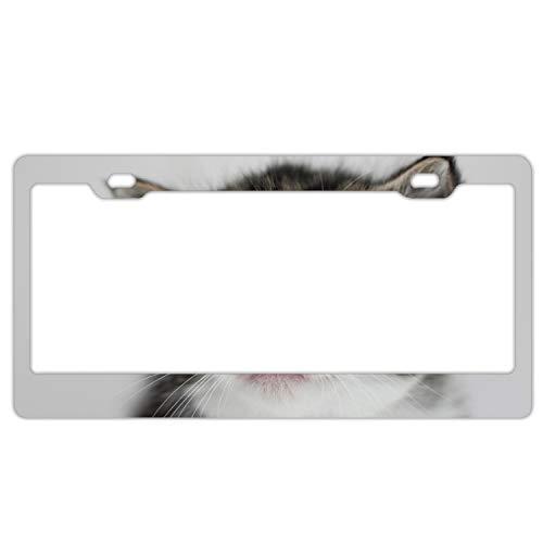 Rongx Kitten Face Eyes Tenderness Polished Aluminum License Plate Frame Mirror Finish 2 Holes