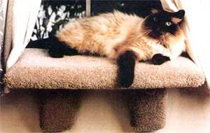 Extra Large Padded Cat Window Perch : Color SPECKLED SAND : Size EXTRA LARGE PERCH