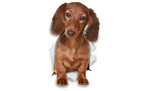 Price comparison product image Winston & Bear 3D Dog Stickers - 2 Pack - Long Haired Dachshund for Wall,  Fridge,  Toilet and More - Retail Packaged Long Haired Dachshund Dog Stickers