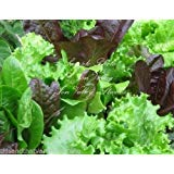 Summers Gourmet Heirloom Lettuce Blend Seeds Natural Non GMO Home and Market