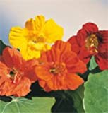 Flower Nasturtium Jewel Mix D1420 (Multi Color) 50 Seeds by David's Garden Seeds