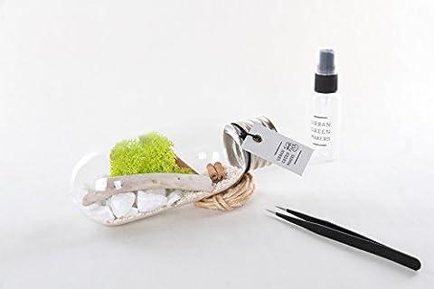 Glass Bulb/Tube Terrarium DIY Kit - Includes Moss, Drift Wood, Rocks, & Other Decorative Supplies - Unique & Customizable (Urban Green Makers Kit 6)