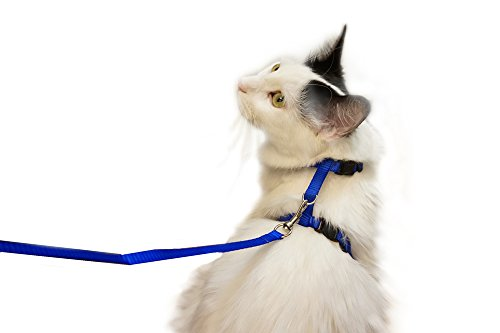 Adjustable-Small-Nylon-Kitty-Harness-with-4-Leash-Blue