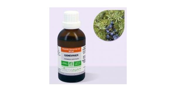 Enebro Bio Extracto de brotes - 50 ml macérât concentrado: Amazon.es: Salud y cuidado personal