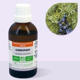 Enebro Bio Extracto de brotes – 50 ml macérât concentrado