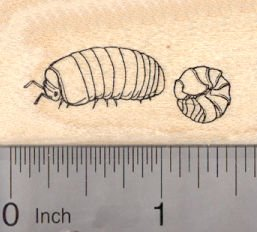 pill-bug-rubber-stamp-roly-poly-potato-bug-sow-bug-woodlice