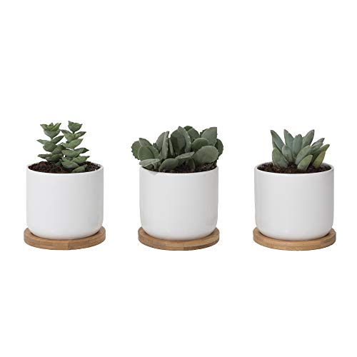 Sona Home White Succulent Pots with Drainage Tray | 4 Inch Pots for Plants, Small Flower Pot, Cactus Planter | Set of 3 Ceramic Succulent -