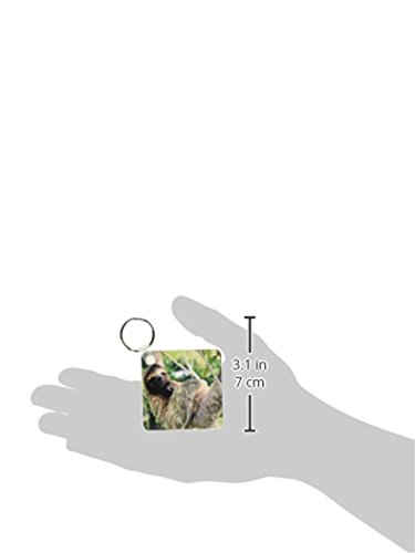 3Drose Three-Toed Sloth Wildlife, Corcovado Np, Costa Rica - Sa22 Ksc0137 - Kevin Schafer - Key Chains, 2.25 X 4.5 Inches, Set Of 2 (Kc_87218_1) -