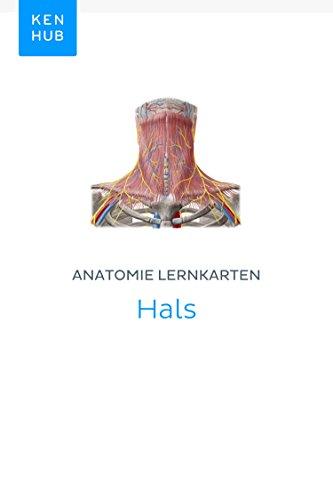 Anatomie Lernkarten: Hals: Lerne alle Organe, Muskeln, Arterien ...