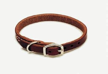 (Coastal Pet Products DCP210312 Leather Latigo Dog Collar, 3/8 by 12-Inch)