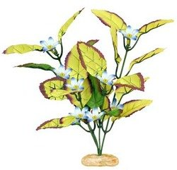 - Blue Ribbon Plant Flowering Willow Leaf Small