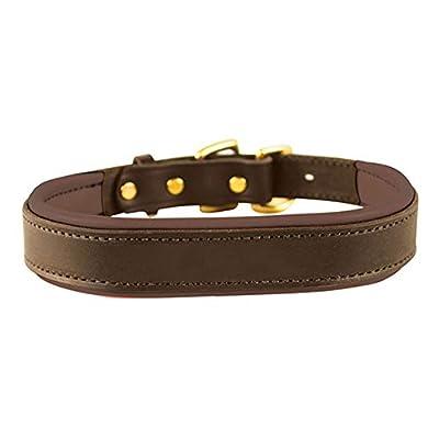 Perri's Padded Leather Dog Collars in Metallic and Bold Non-Metallic Colors