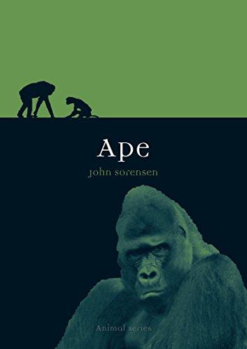 Ape (Animal)