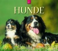 Hunde 2009