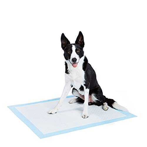 AmazonBasics Heavy Duty Extra Large Pet Dog and Puppy Training Pads, 28 x 34 (Pack of 50)
