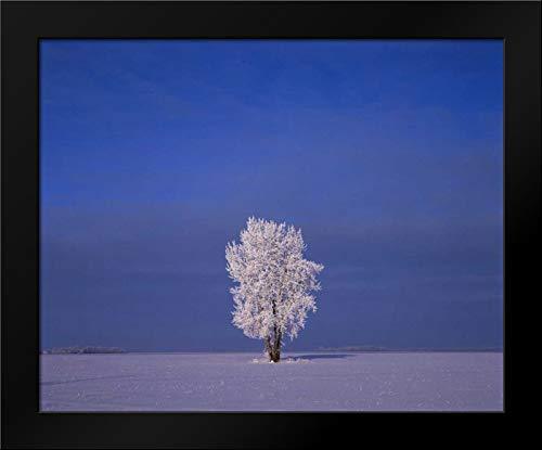 Canada, Dugald, Hoarfrost on Cottonwood Trees Framed Art Print by Grandmaison, ()