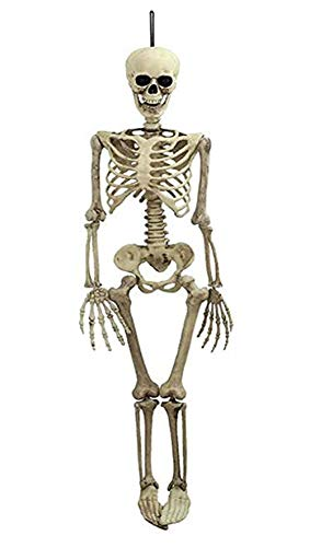 Halloween Skeleton - Life Size Full Body Halloween Skeleton Decorations Realistic Human Bones with Posable Joints for Best Halloween Decoration