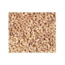 Bulk Grains, 100% Organic Hulled Barley, Bulk, 5 Lbs