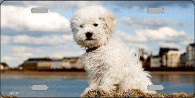 Bichon Frise Vanity Metal Pet Dog Breed Novelty License Plate Tag Sign (Frise Bichon Breeds)