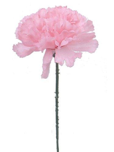 100 Carnations 5