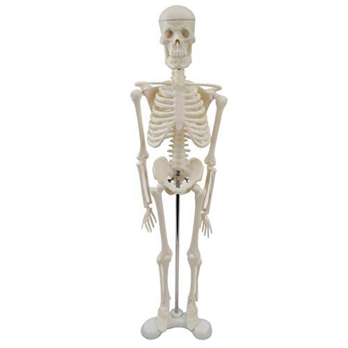 [해외]JUSTDOLIFE 수 지 해골 모형 학교를 위한 실제적인 인간적 인 해부학 적 모형 / JUSTDOLIFE Resin Skeleton Model Realistic Human Anatomical Model for School