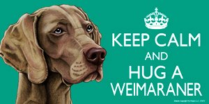 Weimaraner Dog Gift - 'KEEP CALM' LARGE colourful 4' x 8' MAGNET - High Quality flexible magnet for indoor or outdoor use for your Fridge, Car, Caravan or use on any flat metal surface -Water proof and UV resistant. Car-Pets Ltd