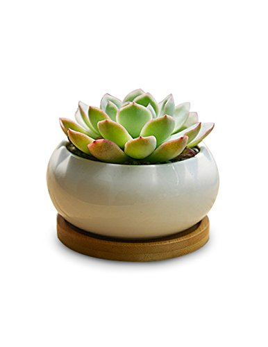 Wholesale Flower Pots,Y&M(TM)Elegance House Flower Pots Indoor Ceramic Planting Vase for Succulent and Cactus Plants with Bamboo Saucer(one pot)