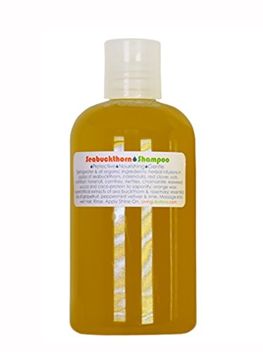 Living Libations - Organic/Wildcrafted Seabuckthorn Shampoo (8 oz / 240 ml)