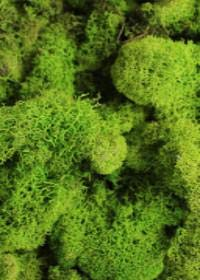 Afloral Preserved Reindeer Moss in Spring Green - .25 lb Bag
