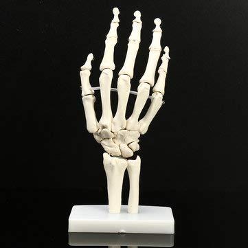 Hand Joint Model Ball Drag Link Halloween Skeleton Decoration - 1PCs -