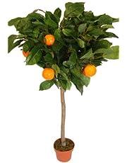 Plantas artificial - Naranjo artificial de 1,2 metros de alto con maceta