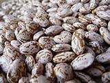 Bean Pinto Great Heirloom Garden Vegetable by Seed Kingdom Bulk 600 Seeds