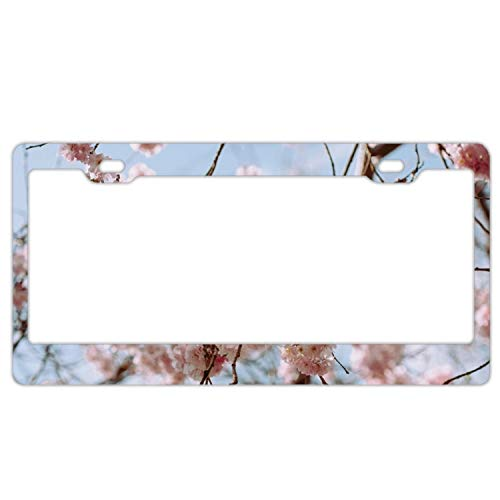 Verna Christopher Product Express Pompadour Flowers Personalized Metal License Plate Frame