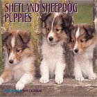 Cal 99 Shetland Sheepdog Puppies Calendar