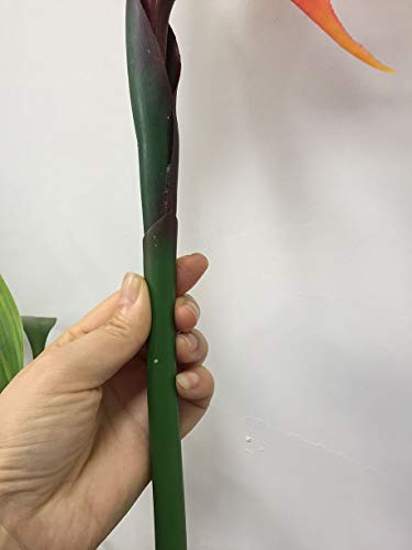 DODXIAOBEUL-Large-Bird-of-Paradise-33-Inch-Permanent-FlowerFlower-stem-05-InchFlower-Part-is-Made-of-Soft-Rubber-PUArtificial-Flower-Plants-for-Home-Office-2-Pcs-Orange-red
