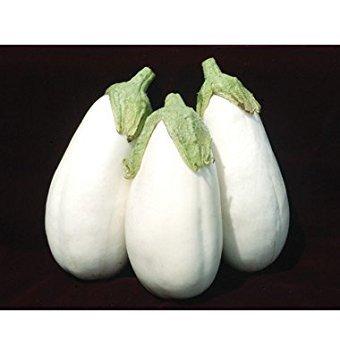 David's Garden Seeds Eggplant Clara D2615 (White) 25 Hybrid Seeds