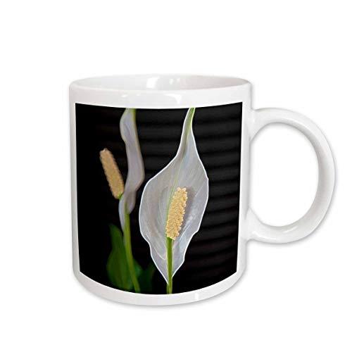 3dRose Jos Fauxtographee- Peace Lily Plant - A close up of some white flowers on a peace Lily Plant - 11oz Mug (mug_300189_1)