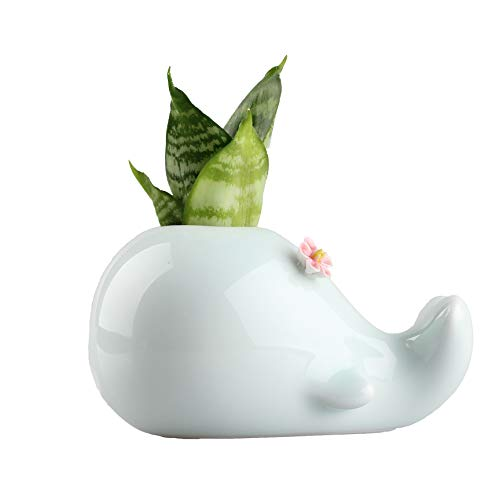NCYP Modern Small Celadon Glaze Ceramic Hydroponics Planter Table Top Plant Hydrocotyle Display Flower Pot Cute Animal Whale Shape Balcony Decor Centerpiece Vase Flower on Head 4.7X2.3X3 inches
