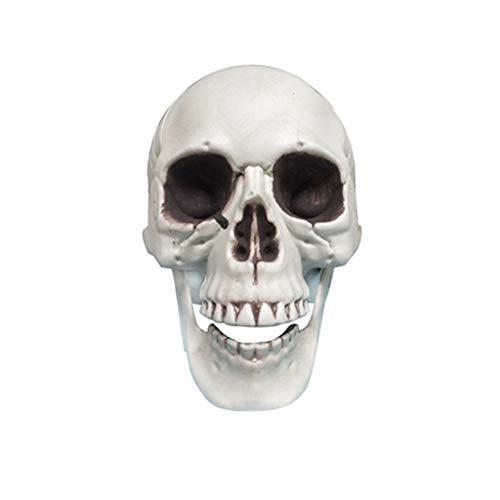 Fan-Ling New Halloween Skull Model,Halloween Decorations Resin Wacky Funny Novelty Skull Toys,Fake Skull Party Prop (XL)
