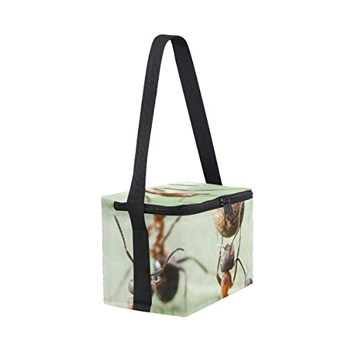 Football with for Seed Cooler Picnic Shoulder Lunch Pepper Strap Plays Ants Lunchbox Bag p8Iwx6Zqt