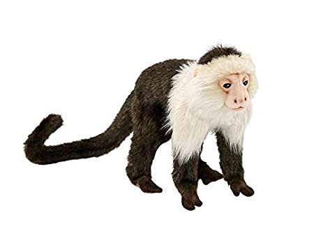 Amazon.com  Hansa Capuchin Monkey Plush  Toys   Games 766b446a7aa7