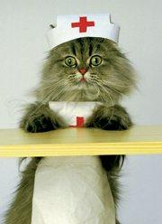 Kitten Nurse Get Well Soon Card Amazon Co Uk Kitchen Amp Home