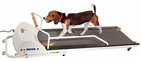 GoPet Treadmill SmallMedium (<132lbs) by GoPet
