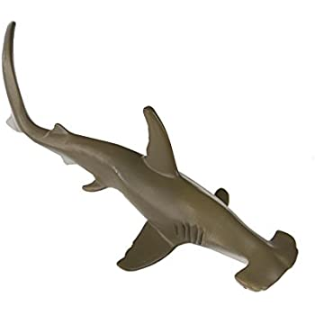 Amazon.com: CollectA Scalloped Hammerhead Shark: Toys & Games